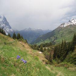 14Jungfraureggrindelwaldgrscheidegg